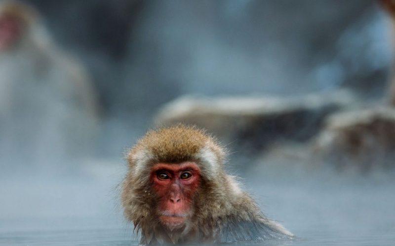 Discussing Confessions of a Shinagawa Monkey by Haruki Murakami | Literary Roadhouse Ep 191